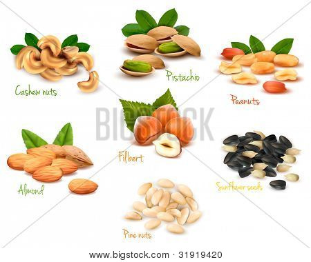 Big collection of ripe nuts. Vector.