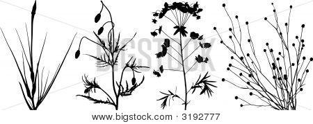 Floral Pack1.Eps