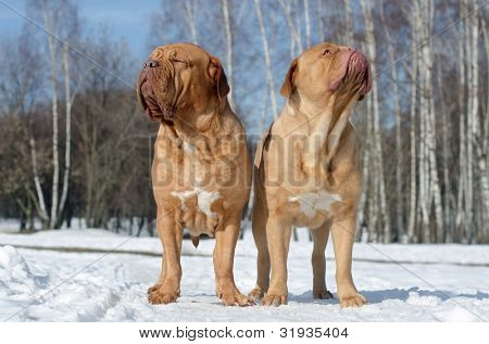 Two dogs relaxing under first spring rays of sun against snow background