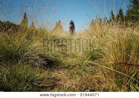 Lonely trekking woman in the nature