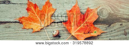 poster of Beautiful Natural Closeup Background With Red Autumn Fall Maple Leaves And Acorn On Wooden Planks. V