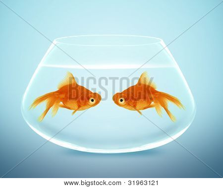 Two Goldfish  Falling In Love