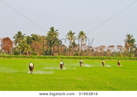 Farmers spraying pesticide