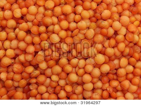 Grains of red lentils