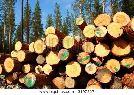 Cut Logs At The Edge Of The Forest