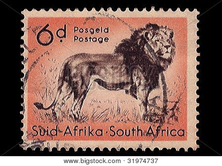 South Africa Postage Stamp Lion 1954