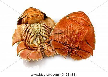 Balmain Bugs