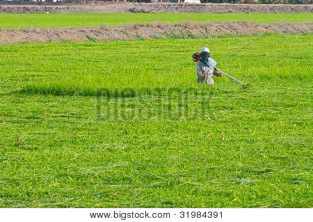 Farmer in the farm