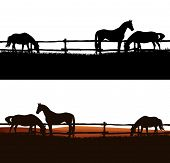 Herd Of Domestic Horses Grazing In The Field Behind Wooden Fence - Animal Farm Vector Silhouette Out poster