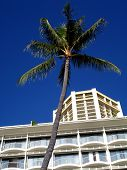Palm Tree And Building poster