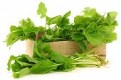 stock photo of turnip greens  - fresh turnip tops  - JPG