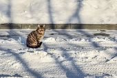 Beautiful Cat Sits On A Winter Road.  Cat Froze On The Street In Winter. Tabby Cat In Winter Sunny D poster