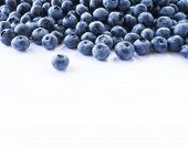 Fresh Ripe Blueberries With Drops Of Dew. Macro Photo. Fresh Blueberry Background. Texture Blueberry poster