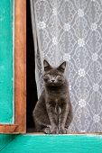 A Beautiful Grey Shorthair Cat Sits On A Window Outside A House In The Village In Summer And Looks O poster