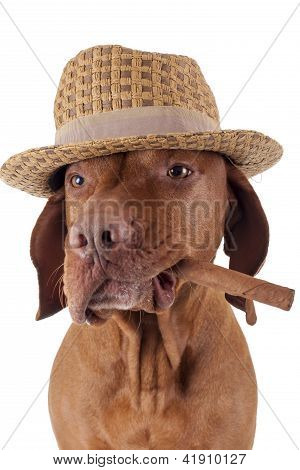 Dog With Cigar In Mouth