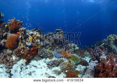 Vivid coral reef with fishes and bubbles in a blue tropical sea. Balicasag island, Philippines
