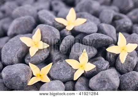 Yellow Ixora Flower Extreme Close Up