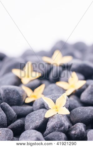 Yellow Ixora Stone On Black Zen Stones Close Up