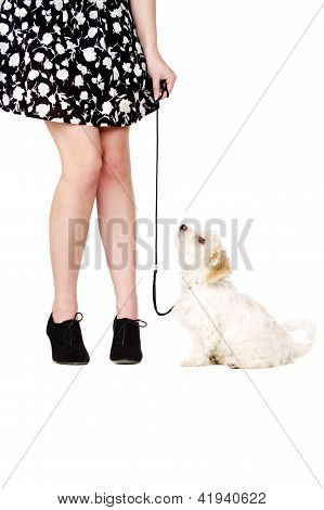 Puppy On A Black Lead Next To A Woman's Legs