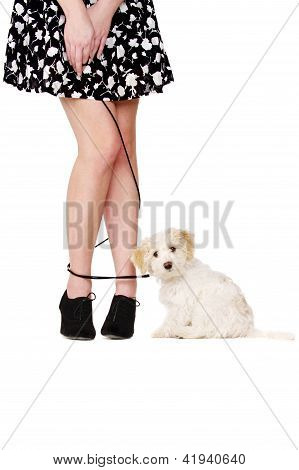 Lady's Legs Tangled With A Puppy On A Black Lead