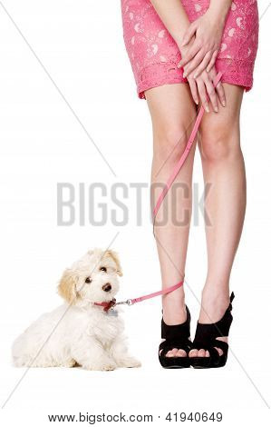 Lady's Legs Tangled With A Puppy On A Pink Lead