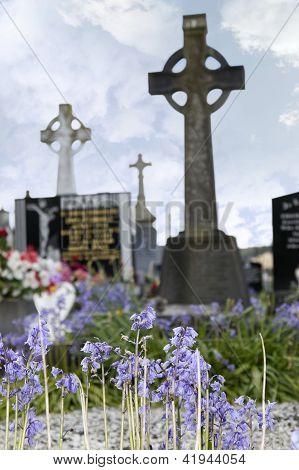 Bluebells In Old Ancient Irish Graveyard