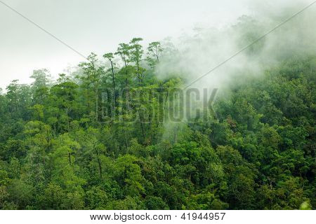 Tropical forest early morning landscape , thailand