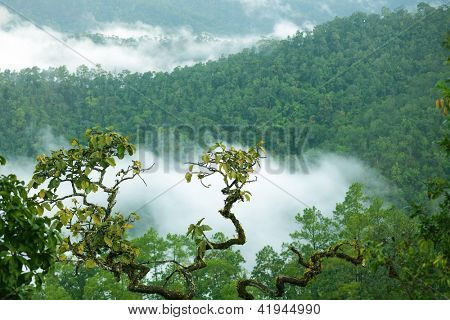 Rainforest landscape in Morning fog, Doi Kiew Lom viewpoint, Pangmapha, Thailand