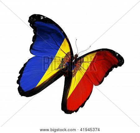 Moldavian Flag Butterfly Flying, Isolated On White Background