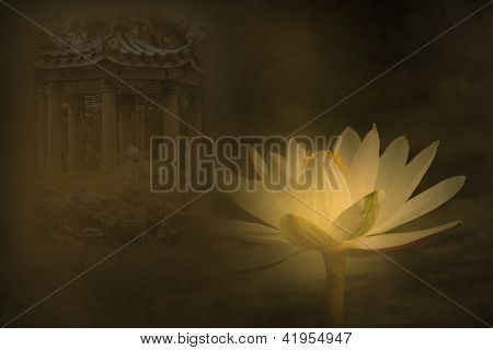 Mysterious Water Lily Pond