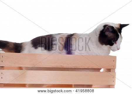 White Cat In Wood Crate