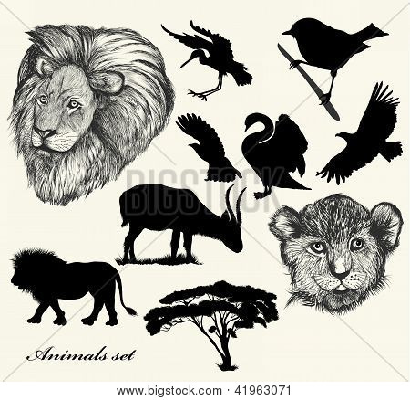 Collection Of Hand Drawn  Animals And Silhouettes