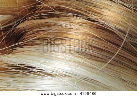 Blond And Brown Hair