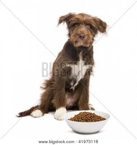 Crossbreed, 5 months old, sitting behind a bowl full of dog food and looking at camera against white background