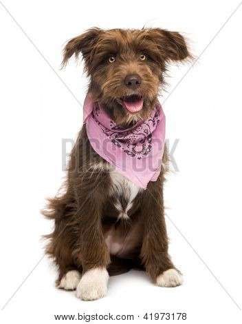 Crossbreed, 5 months old, sitting and wearing a pink scarf against white background