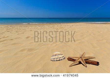 Sea and shell on the beach