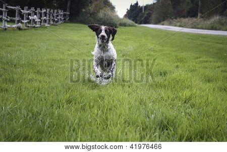 dog running through water
