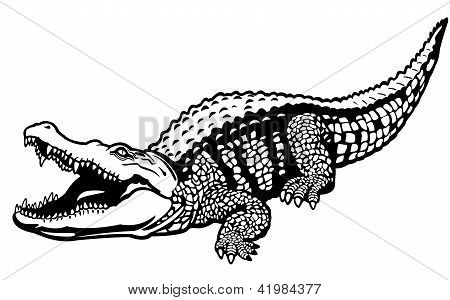 Nile Crocodile Black White