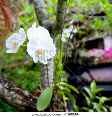 Beautiful moth orchid or phalaenopsis growing on a tree branch
