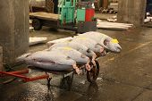 stock photo of yellowfin tuna  - Giant Frozen Tuna for sale in a Tokyo fish market - JPG