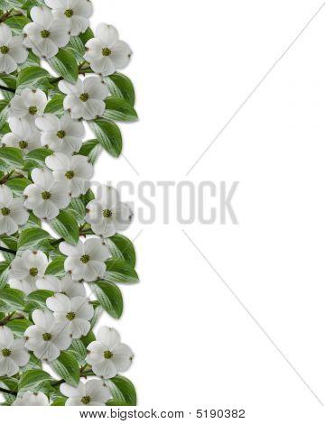 Floral Border Dogwood In Bloom