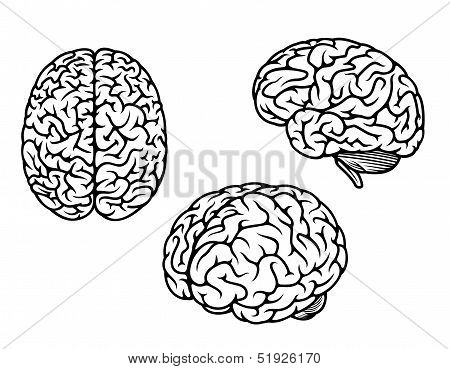 Human brain in three planes