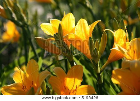 Beautiful Yellow Flowers