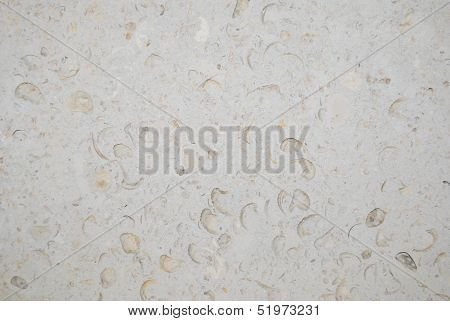 Shells in Stone