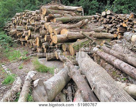 Tree Log Pile Landscape