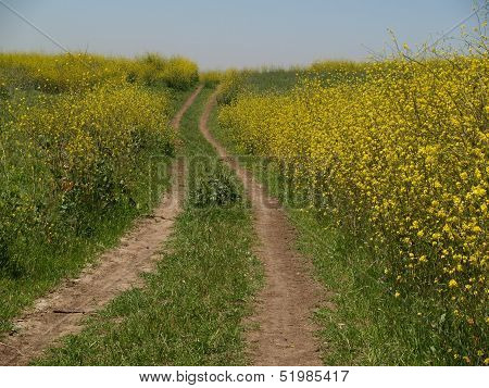 Road through Field