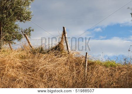 A Fence Posts And An Italian Farm Field