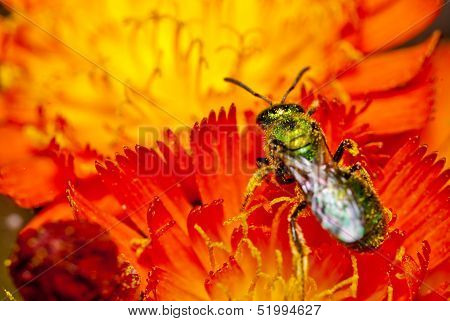 Green insect on red flowers