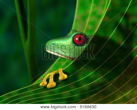 Endangered Rainforest Tree Frog