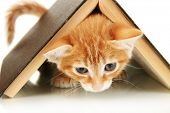 stock photo of orange kitten  - Cute little red kitten and book isolated on white - JPG